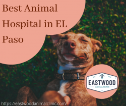Best Animal Hospital in El Paso