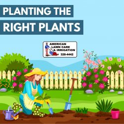 Budget Friendly Landscaping Services