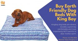 Buy Eco-Friendly Dog Beds With King Boy