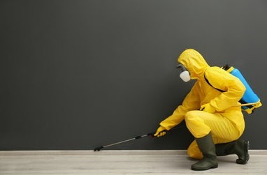 Certified Provider of Pest Control in India