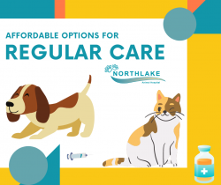 Keep Your Pets Healthy All Year Long