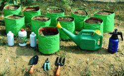Oviedo – anuncios clasificados de jardinería, herramientas, productos para el cultivo R ...