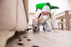 Is Pest Control Harmful To Humans?