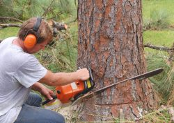 Why Are Tree Removal Services Necessary for Problematic and Diseased Trees?