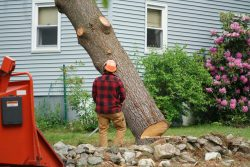 What Are Some Helpful Ideas for Lowering the Cost of Tree Removal? Why Is It Required?