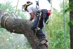 Why Is Choosing a Tree Removal Service Provider Important for Dangerous Trees?