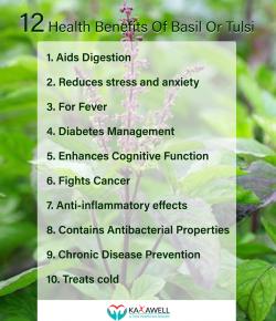 12 Health Benefits of Basil