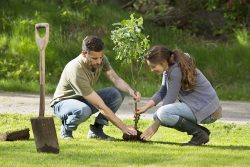 What Are the Most Useful Tree Maintenance Guidelines for a Well-maintained Backyard?