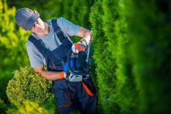 Lawn Mowing Services In Wantirna South At Affordable Price.