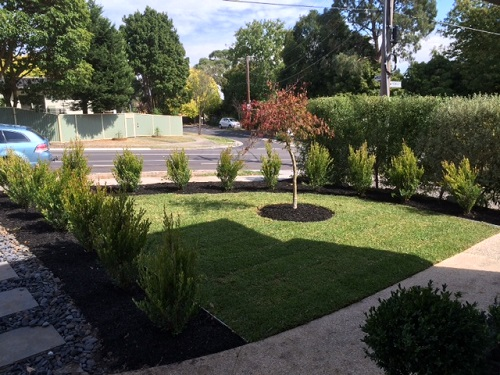 Lawn Mowing Services In Healesville At Affordable Price.