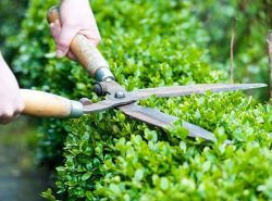 Get Lawn Mowing Services In North Melbourne.