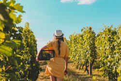 Chastity Valdes's Wine Blogs