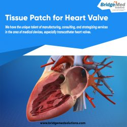 Tissue Patch for Heart Valve