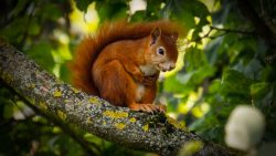 How Can You Keep Squirrels From Damaging Your Trees?