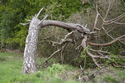 What Kind of Symptoms in Tree Indicate That It's Time to Cut Down a Tree?