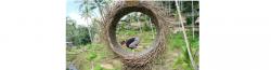 AnandamYogaSchool: Yoga Workshops in Bali