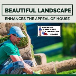 Get Your Landscape Into Greeny Transformation