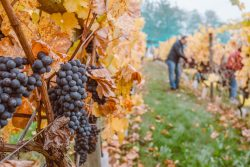 Chastity Valdes Wine Basics from Grapes to Glass