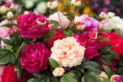 Best Florist in Spain | Shlomo Yoshai