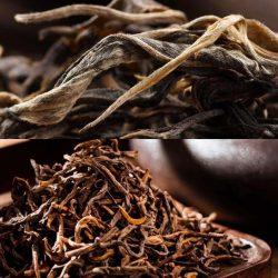 Tea Combo Yunnan Puer Teas