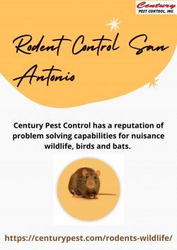 Rodent Control San Antonio – Century Pest Control