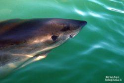 Best Five Star shark Diving -whitesharkprojects Gansbaai, South Africa