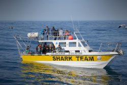 Shark diving south Africa