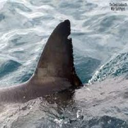 Volunteer with Sharks South Africa