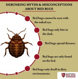 Debugging Myths and Misconceptions About Bed Bugs