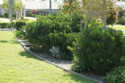 Lawn Mowing Broadmeadows
