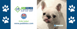 Best Quality Dog Pads – Pad Delux