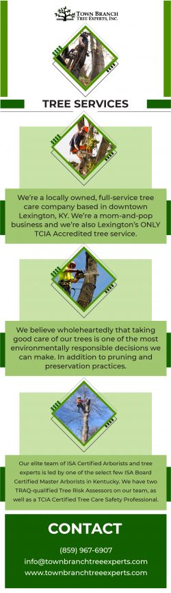 Top Most Tree Service in Lexington KY | Town Branch Tree Expert