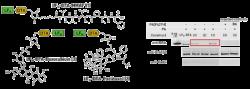 Mycoplasma genitalium Antibodies and Antigens