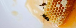 Get The Bee Exterminator And Removal Services in Delhi