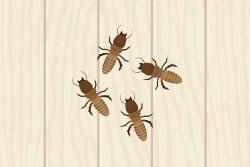 Baby Termite