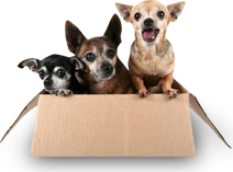 Pet Transport Melbourne | Animal Carriers, Pet Cargo & Movers